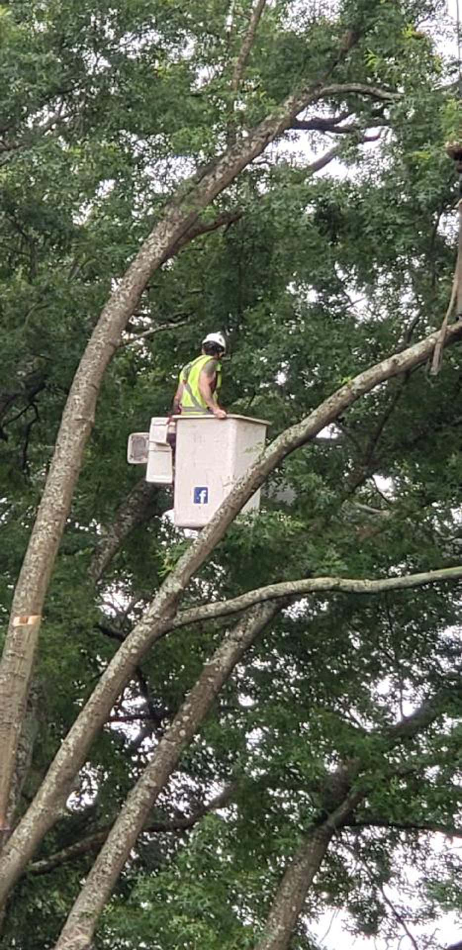 Man In Cherry Picker Trimming Tree