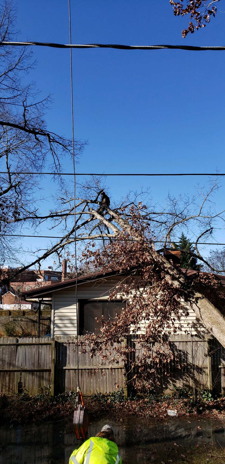 Tree Fallen On Top Of House